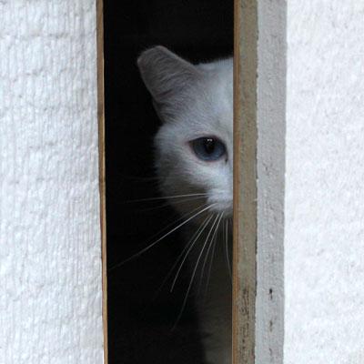 Our ... & How to keep a door-dashing cat safe » AdoptaPet.com Blog Pezcame.Com