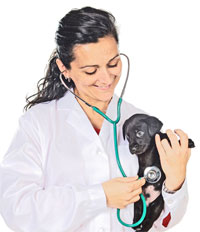 What To Ask The Vet