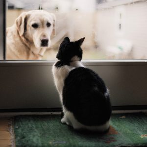 introducing-cats-to-dogs