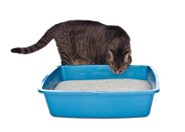 litter-box-training-saves-cats-lives