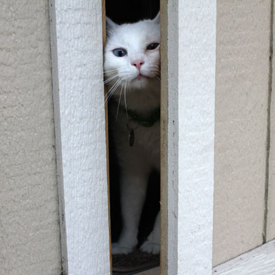 Adopt A Pet Com Blog How To Keep A Door Dashing Cat Safe Adopt A