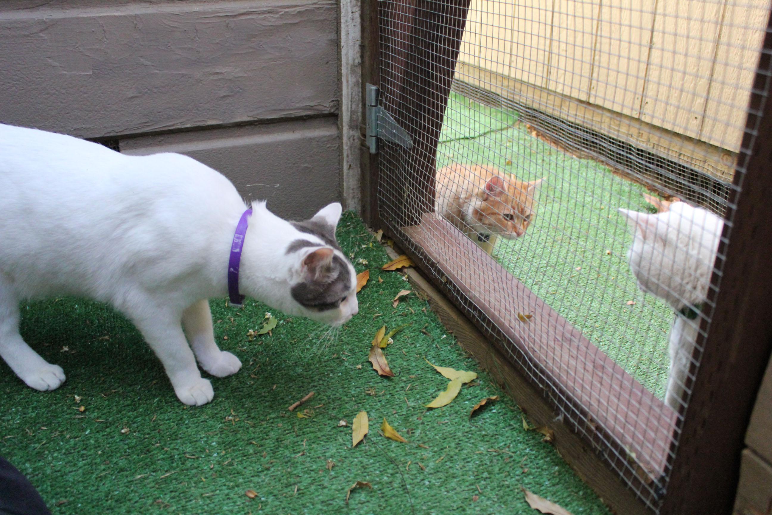 Cat Door Dog Proof Magnet