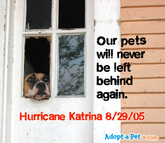 How To Adopt Dogs From The Hurricane