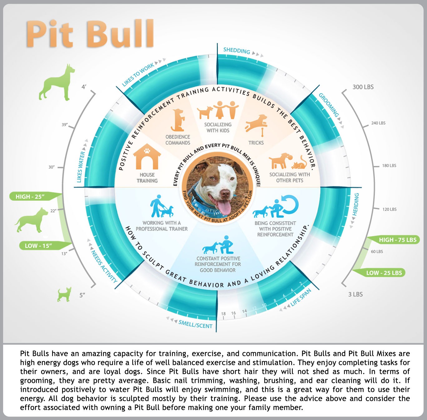 Pit Bull Sale Advice