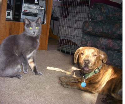 Happily adopted dog with cat friend