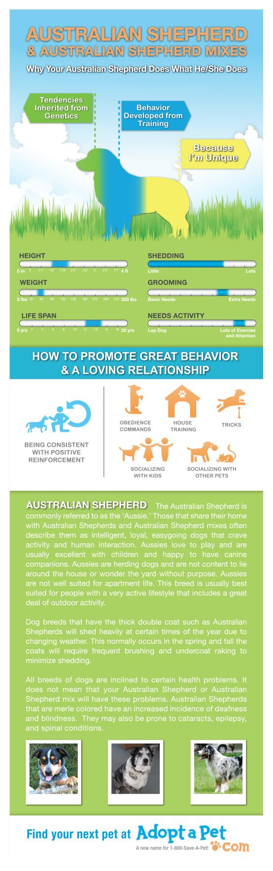 Adopt-A-Pet Australian Shepherd Dog or Puppy