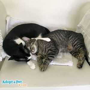 cat behavior includes cat snuggling