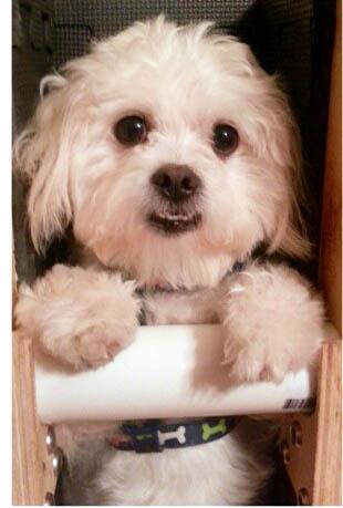 adopting a dog with megaesophagus adopt a blog. Black Bedroom Furniture Sets. Home Design Ideas