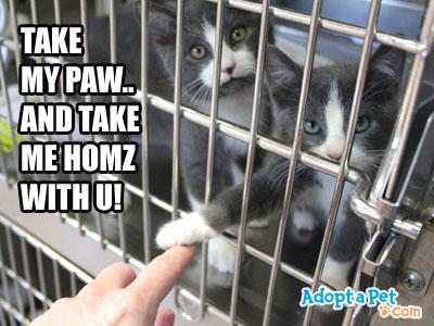 take-us-home-kittens
