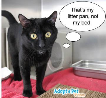 cat-bed-litter-pan