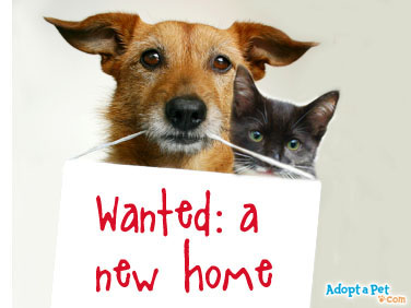 cat-dog-wanted-a-new-home
