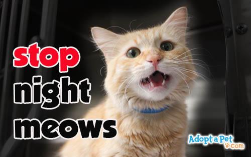 Cat Incessant Meowing