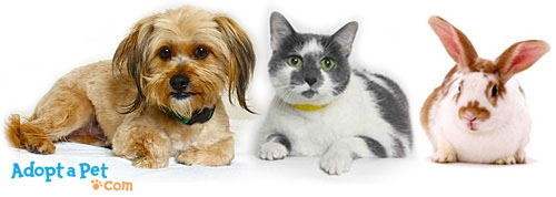 Use Our Website S Search To Find Pets For Adoption