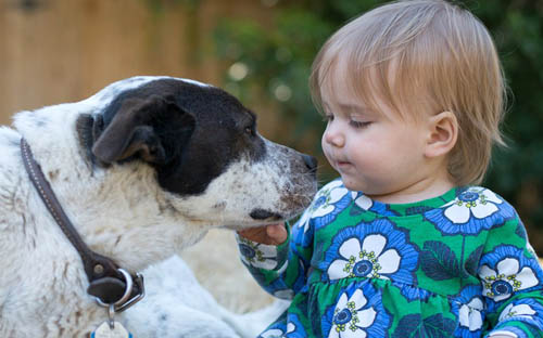petcentric-dog-baby