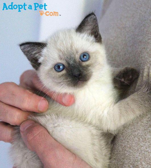 Anna-kitten-AAP