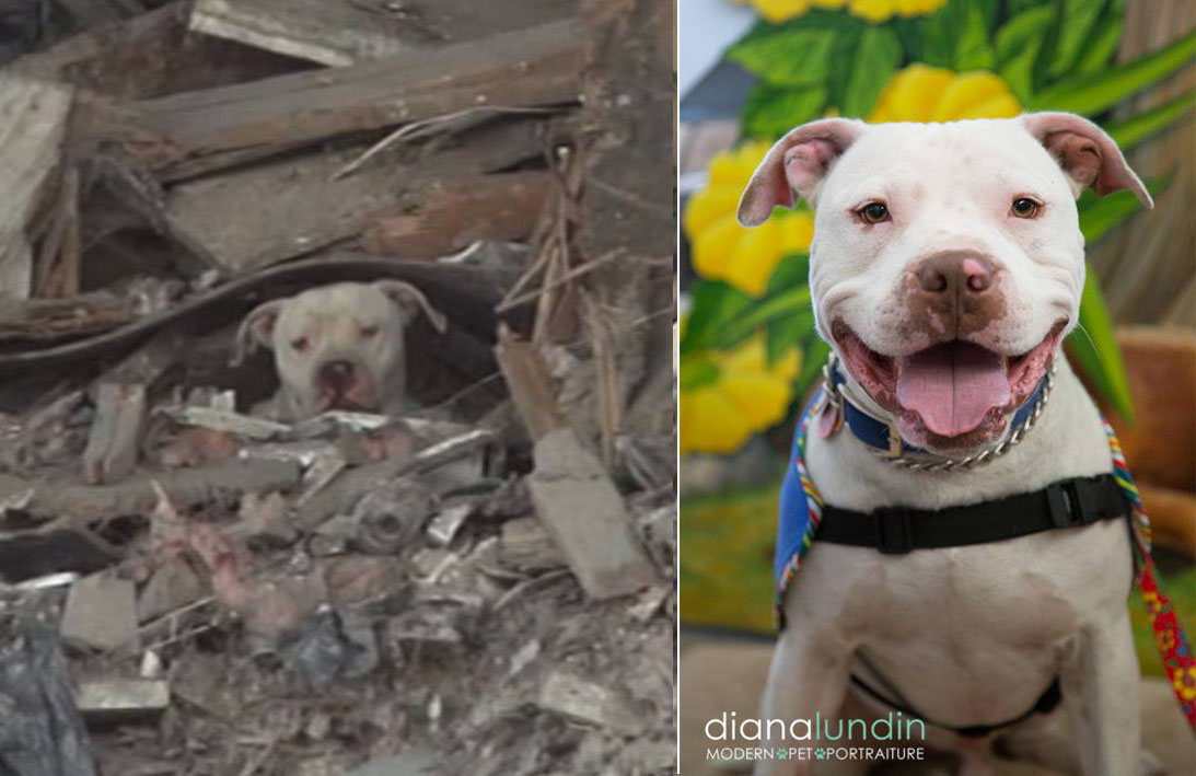 Thor-trash-pit-bull-rescue