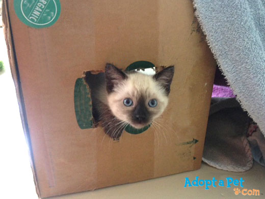 kitten-fort-box2