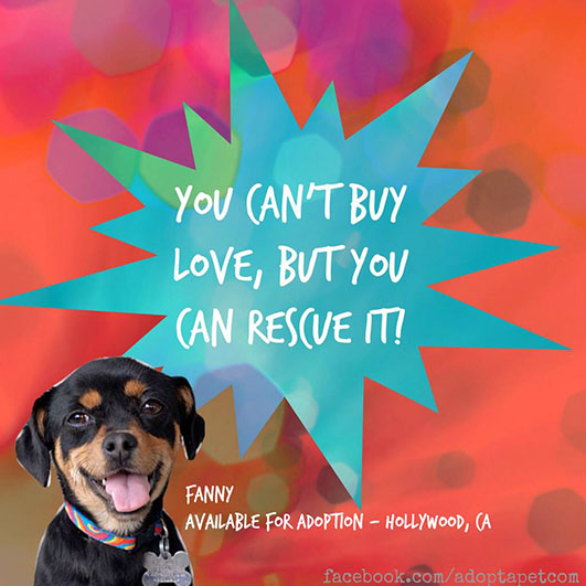 you-cant-buy-love-but-you-can-rescue-it
