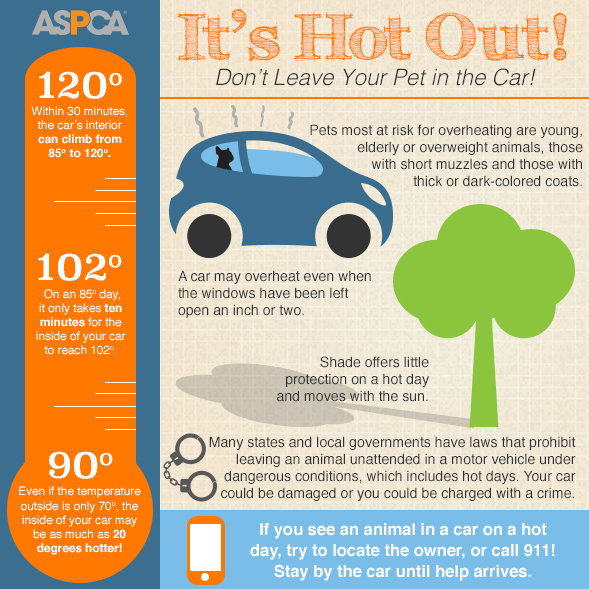 hot-cars-infographic-ASPCA