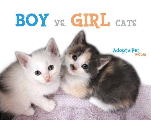 2kittens-boy-girl