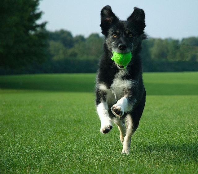 exuberant-dog-1408452-639x560