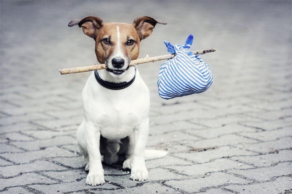 free pup