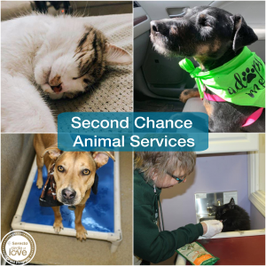 second-chance-social-grant