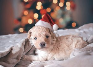 adopt-a-pet-gift-guide-2019