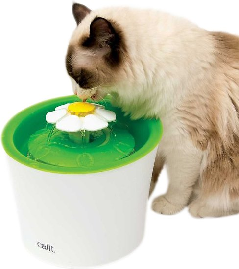 Keep Your Cat Hydrated and Happy