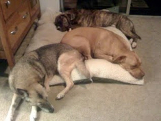 7-tips-for-brining-home-a-shelter-dog-pic2