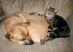 Adopt A Petcom Blog 6 Steps To Introduce A New Cat To Your Dog
