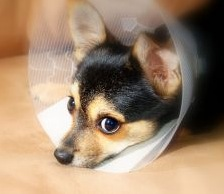 625780_puppy_recovery_2
