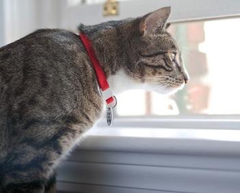 keep-your-indoor-cat-happy