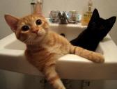 adopting-bonded-pair-animals