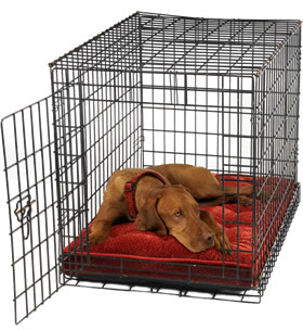 How To Crate Train A Dog From A Shelter