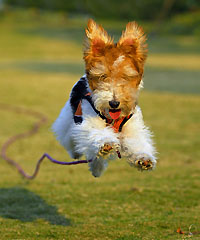 dog-running-jerry-xu