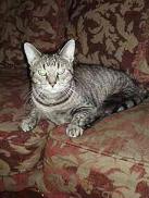 wobble-cat