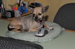 senior-pet-adoption