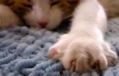 cat-declawing