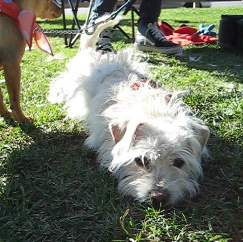 Puppy shy in park