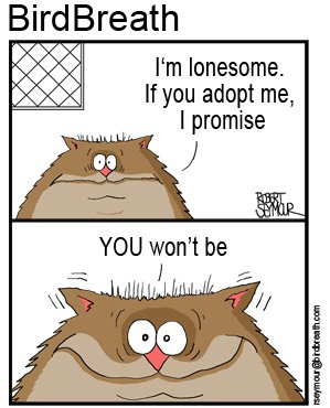 pet-adoption-cartoon-1
