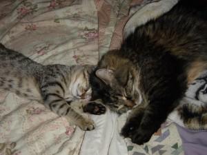TWOC-kitten
