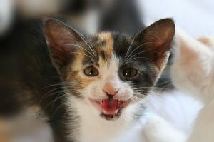 721201_complaining_kitty