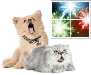 https://www.adoptapet.com/blog/wp-content/uploads/2011/06/dog-cat-fireworks.jpg