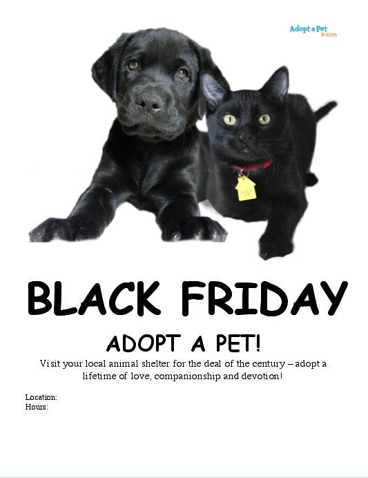 Black Friday Shelter Pets Adopt A Pet Blog