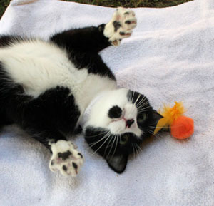 Best Toys For Cats To Play With
