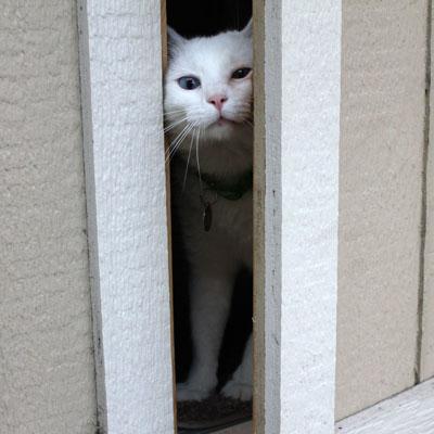 How to keep a door-dashing cat safe » Adopt-a-Pet.com Blog
