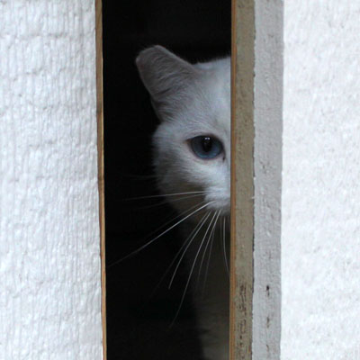 Adopt A Pet Com Blog How To Keep A Door Dashing Cat Safe