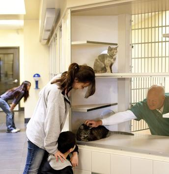 Image of: Puppy Animal Shelter Your Local Adoptapetcom Blog Shelter Spca Humane Society Or Rescue